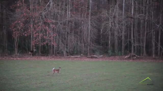 9 Point Alabama Buck Kill