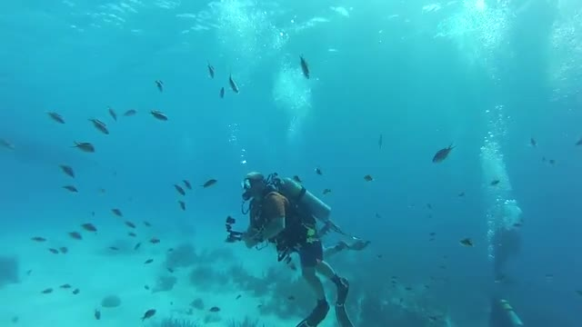 Diving Bonaire 2017 Teaser - Pamlico Divers