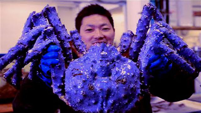 Top 5 Biggest Crabs Ever…