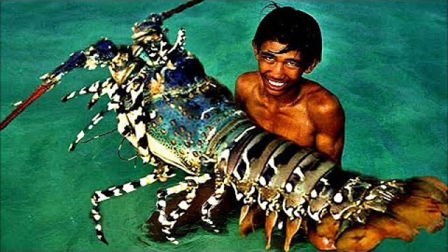 Top 5 Biggest Lobsters Ever…