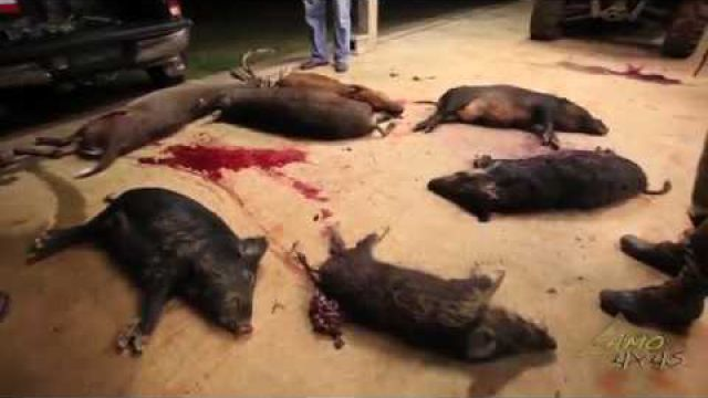 Camo4x4s Hog Kills the Ultimate Shots